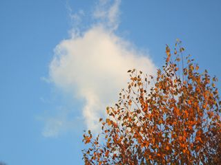 Leaves and cloud